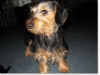 slideshow-dachshunds-0112